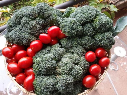 Sughi vegetariani